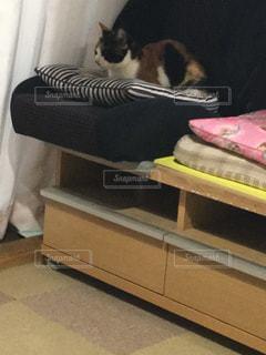 猫 - No.384708