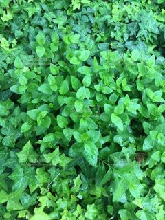 植物の写真・画像素材[1263085]
