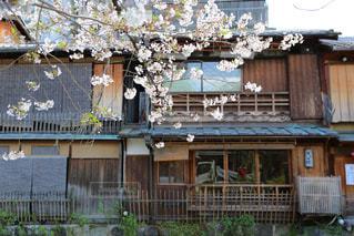 桜 - No.386214
