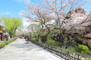 No.386215 桜