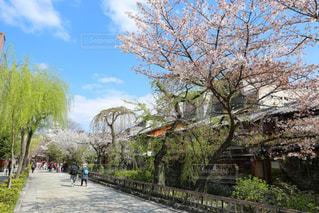 桜 - No.386216