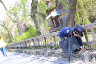 桜 - No.386217