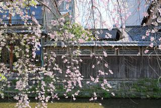 桜 - No.386218