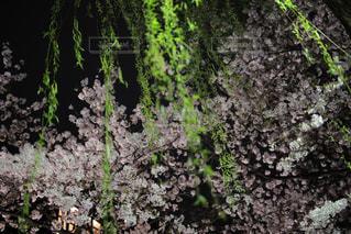 森林の写真・画像素材[386244]