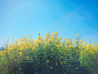 春の写真・画像素材[385452]