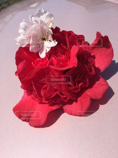 花の写真・画像素材[386666]