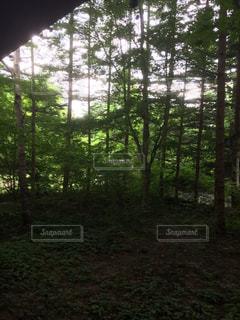 風景の写真・画像素材[385918]