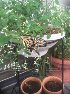 昆虫の写真・画像素材[385941]