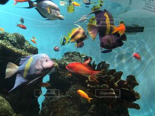 魚の写真・画像素材[385943]