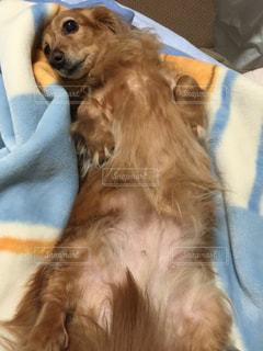 犬の写真・画像素材[385945]