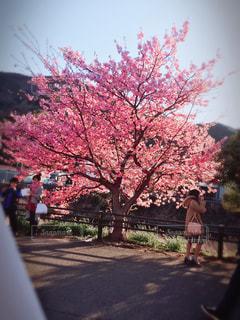 春 - No.385934