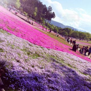 春の写真・画像素材[385958]