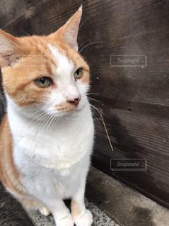 猫の写真・画像素材[385965]