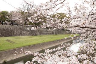 春の写真・画像素材[425604]