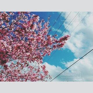 花の写真・画像素材[29764]