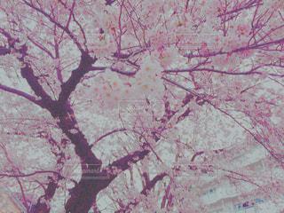 自然の写真・画像素材[387182]