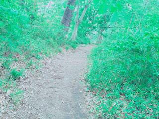 公園の写真・画像素材[388331]