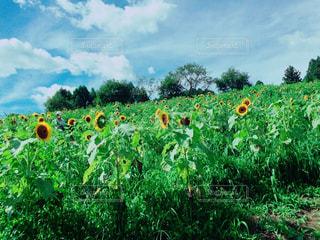 花の写真・画像素材[388373]