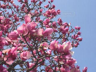 花の写真・画像素材[398047]
