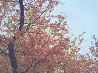春の写真・画像素材[520387]
