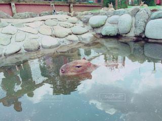 温泉の写真・画像素材[595218]