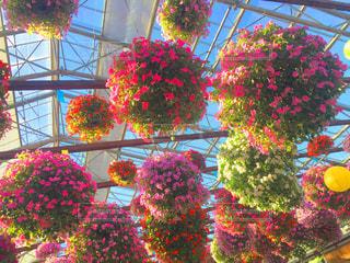 色とりどりの花のグループの写真・画像素材[978024]