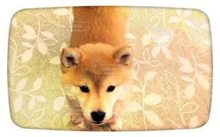犬の写真・画像素材[388998]