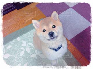 犬の写真・画像素材[395834]