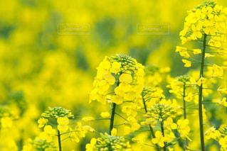 春の写真・画像素材[396793]