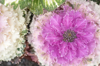 春の写真・画像素材[396795]