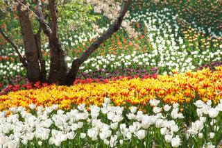花の写真・画像素材[396822]