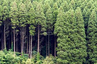 木の写真・画像素材[396824]