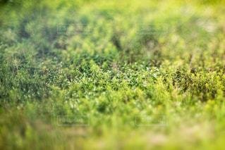 雑草の写真・画像素材[396831]