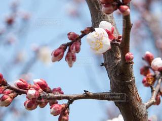 春の写真・画像素材[396837]