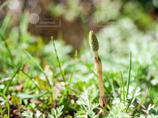 春の写真・画像素材[396847]