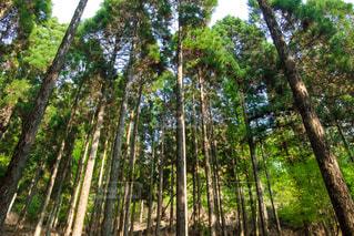 木の写真・画像素材[396851]