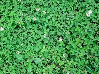 緑の写真・画像素材[406138]