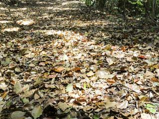 森の写真・画像素材[432951]