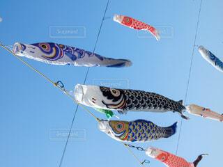 風に泳ぐ鯉のぼりの写真・画像素材[1792211]