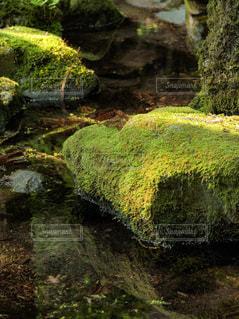 森の中の小さな泉の写真・画像素材[1812505]