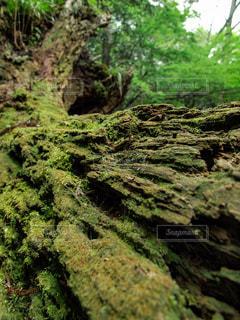 自然の中の小さなジオラマの写真・画像素材[1812510]