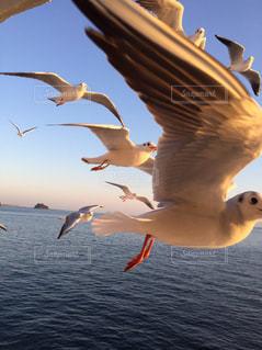 海の写真・画像素材[509955]