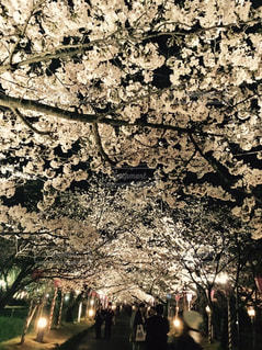 春の写真・画像素材[509958]