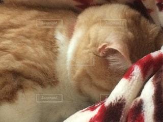 猫の写真・画像素材[388085]
