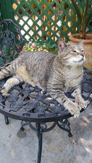 猫の写真・画像素材[387804]
