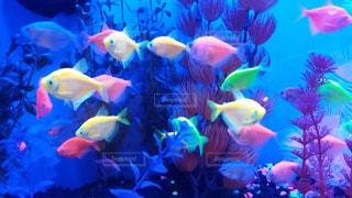 魚 - No.387862