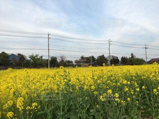 花の写真・画像素材[389241]