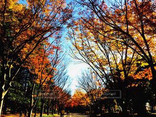 公園 - No.388091