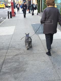 犬の写真・画像素材[388162]