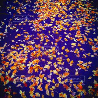 花の写真・画像素材[388859]